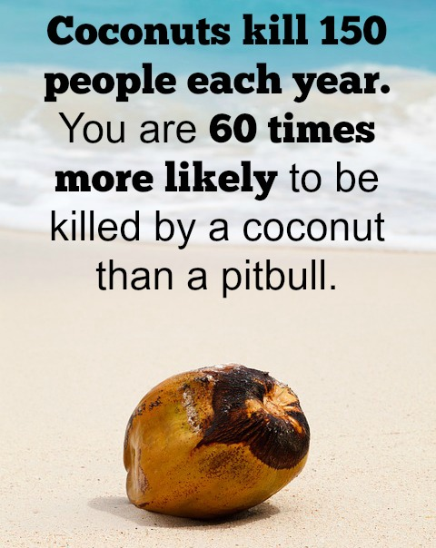 COCONUTS Quotes Like Success