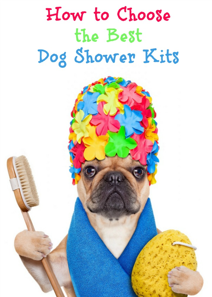 How to Choose the Best Dog Shower Kits