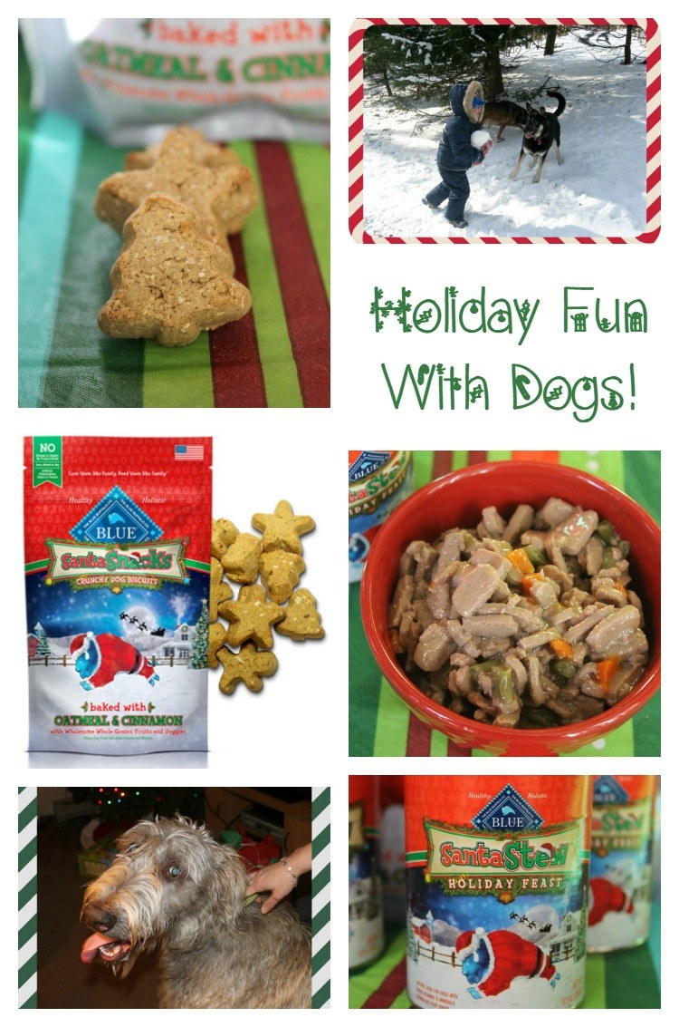 Fun Ways to Include Your Dog in Your Holiday Celebrations with Help from
