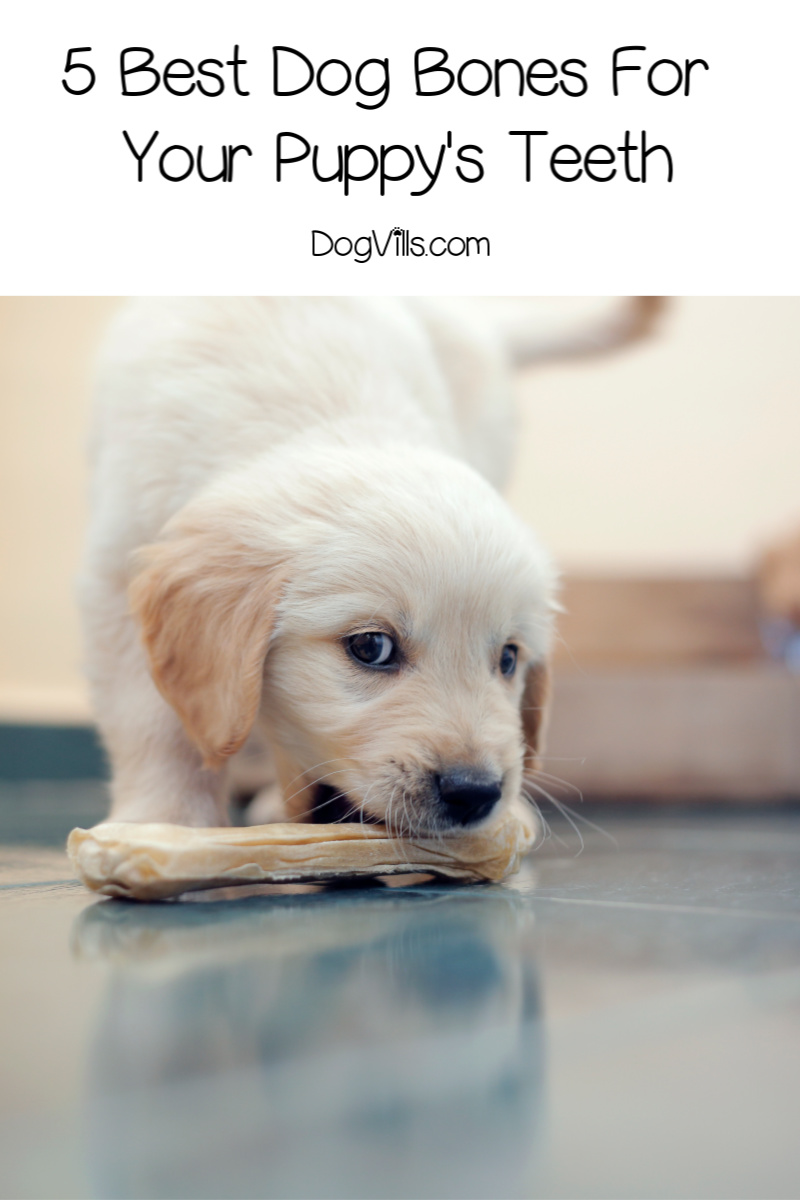 The Best Dog Bones For Your Puppy's Teeth