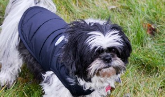 Keep your beloved canine companion cozy & warm during the harsh northern winters with North Fetch dog jackets! They're affordable & stylish! Check them out!