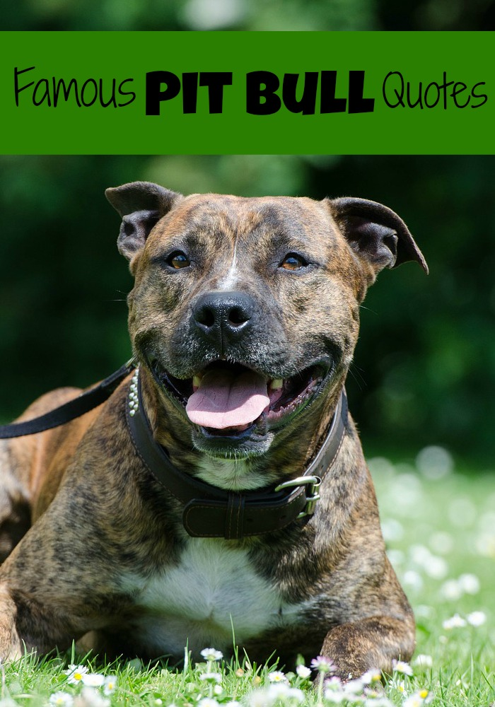 Breed specific laws in pa about dating 6