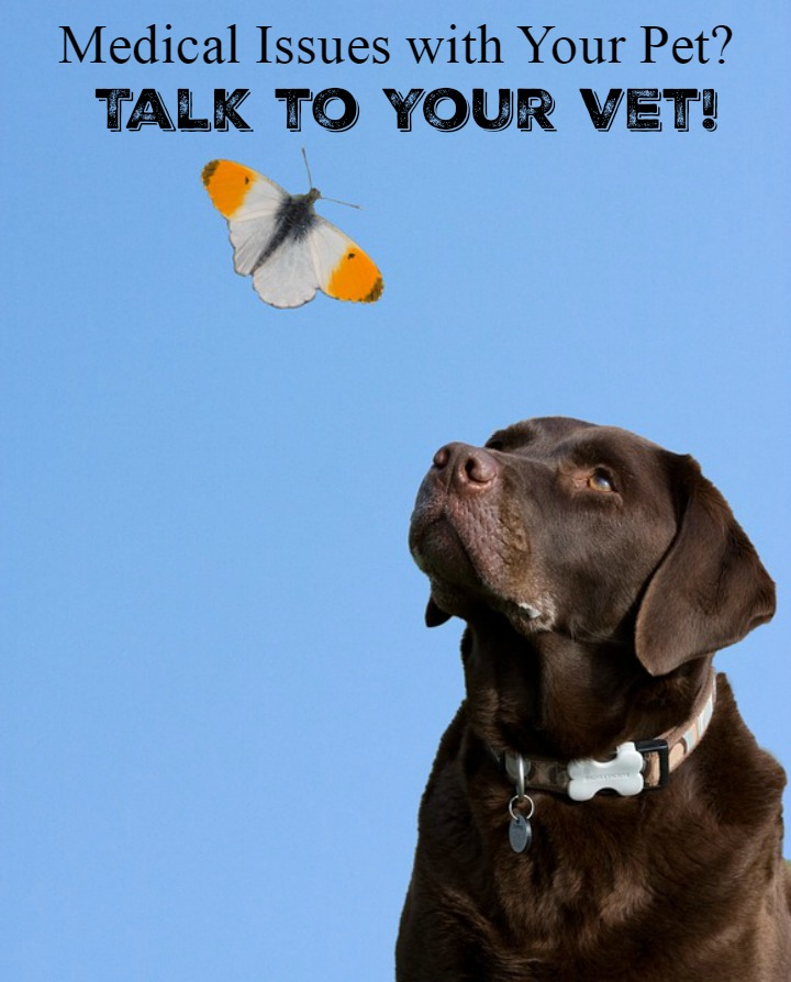 Medical Issues with Your Pet? Talk to Your Vet