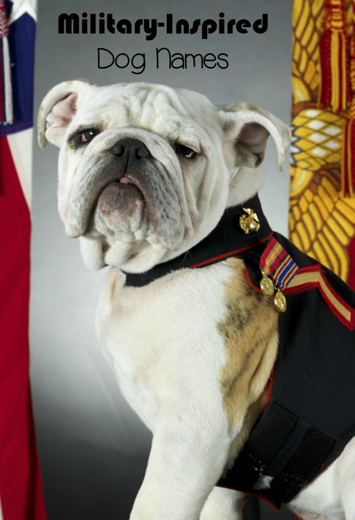 Military Inspired Dog Names You'll Love