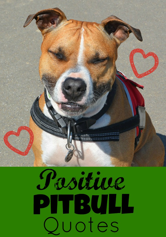 Our Favorite Positive Pitbull Quotes - DogVills