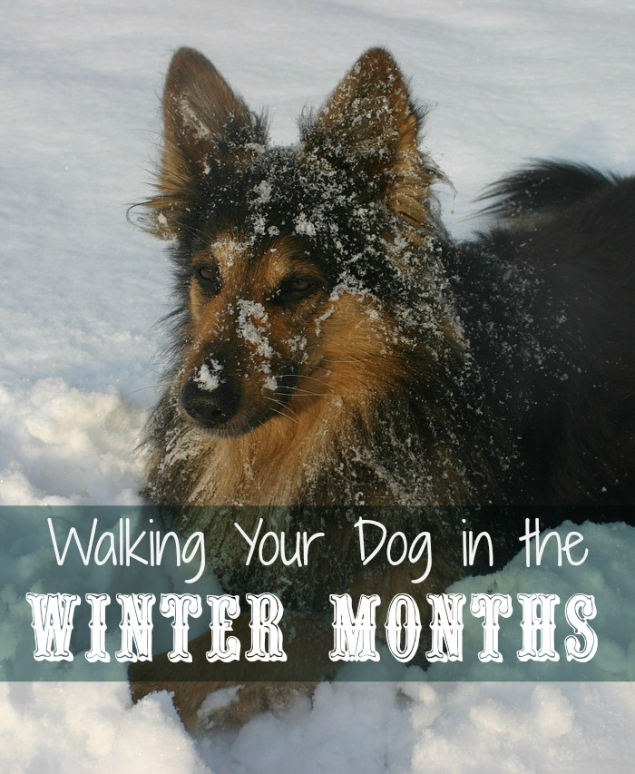 Tips for Walking Your Dog in the Winter Months