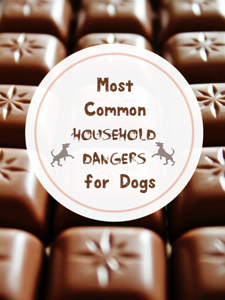 Most Common Household Dangers for Dogs