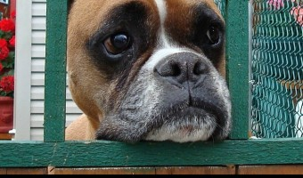 If your pooch is suffering from separation anxiety and tearing the place to shreds while you're gone, you might want to consider crate training. Is there a best crate for anxiety? Not really. HOWEVER, the right way of using a dog crate plays a major role in easing your pup's fears. Check out our tips.