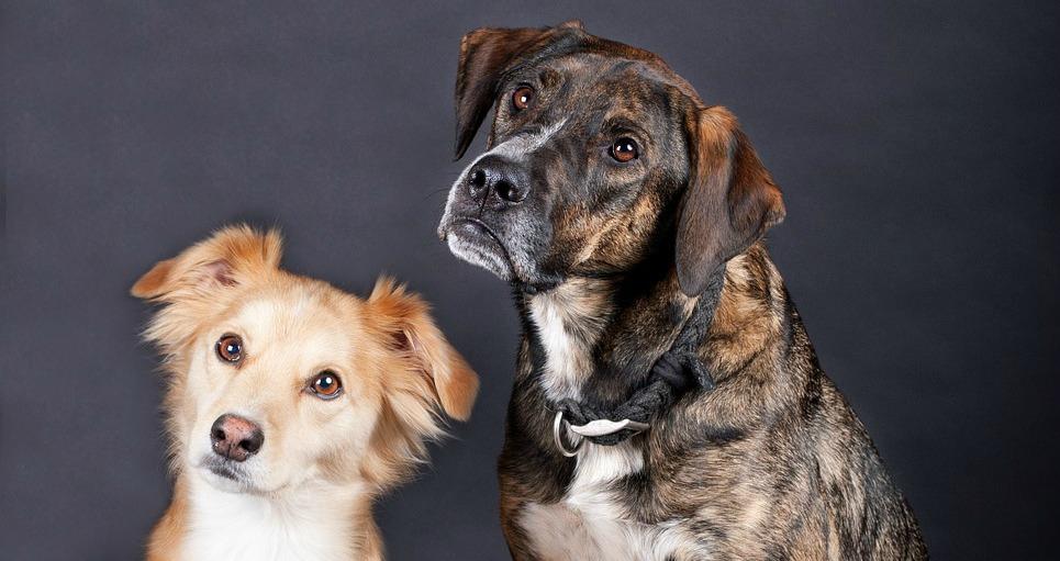 Why Would A House Trained Dog Pee Inside