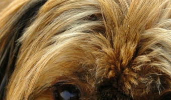 Irritated skin is an unfortunate side effect of allergies in dogs. If you follow these suggestions, you can help ease your dog's irritated skin.