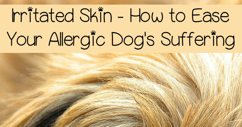 Irritated Skin How To Ease Your Allergic Dogs Suffering Dogvills