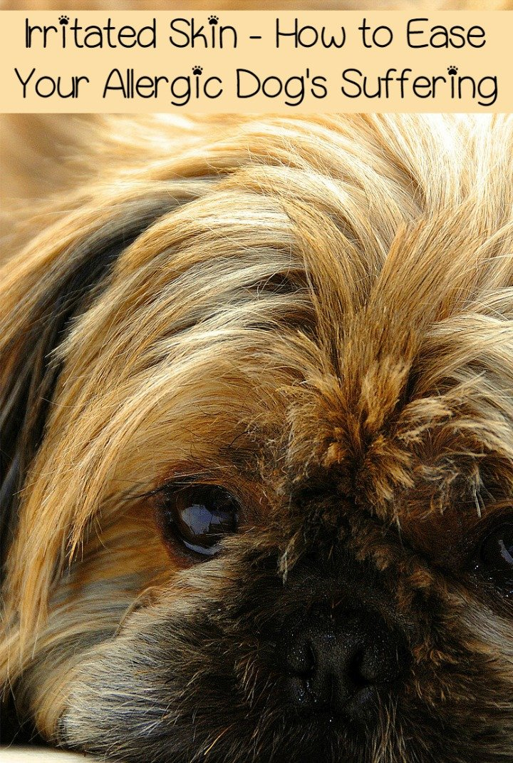 Irritated Skin – How to Ease Your Allergic Dog's Suffering
