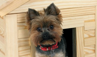 Menards is a great resource for all your dog needs, including shelter. Check out our tips for choosing the best Menards Dog House!