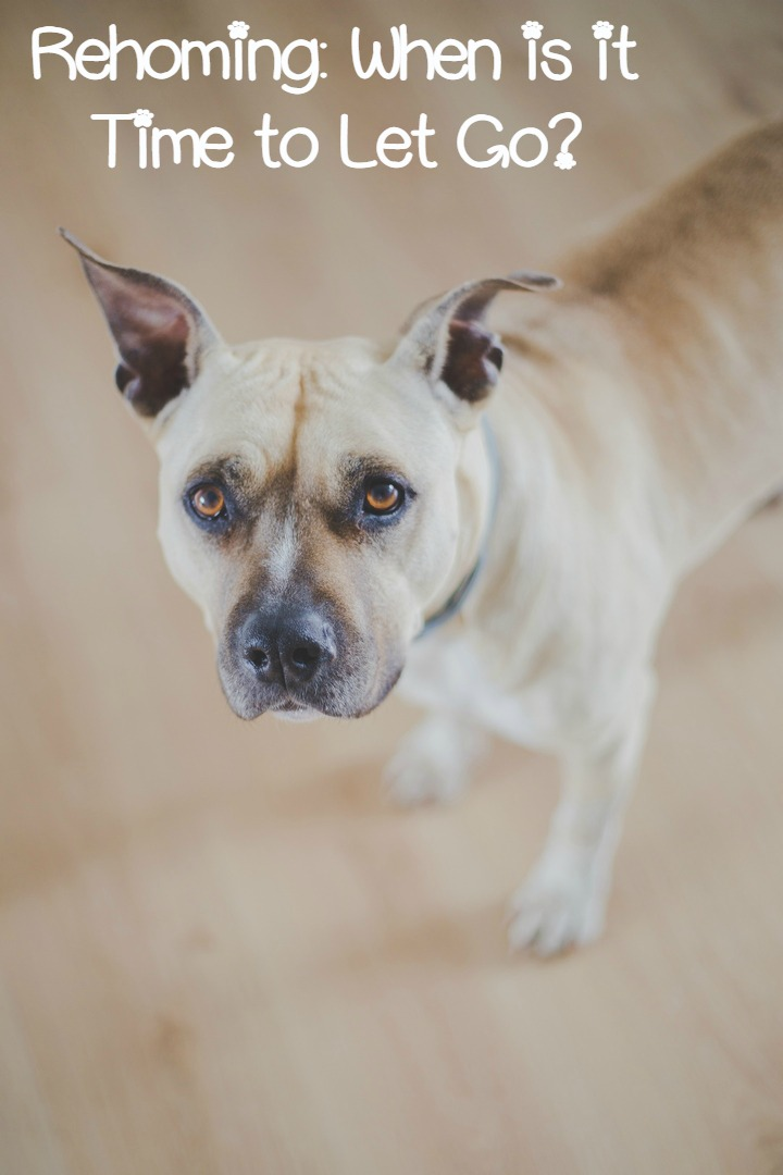 Rehoming Your Dog – How Do You Know When It's Time