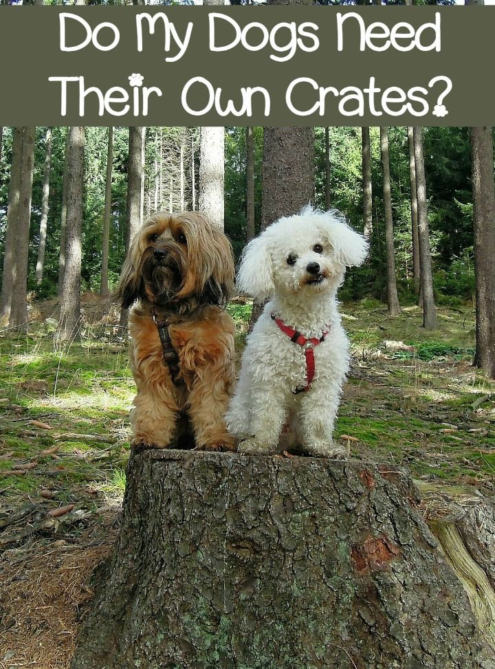 Do My Dogs Need Their Own Crates?