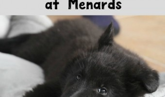 Menards is a great resource for lots of different household products! Dog beds are no different.Check out our guide to Menards dog beds!