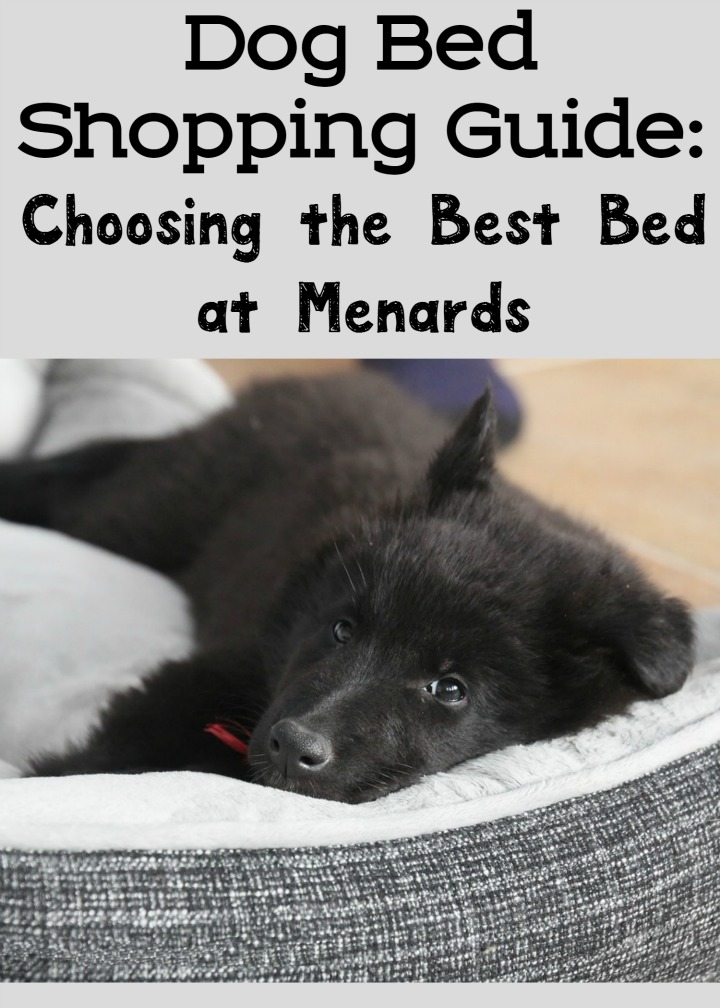 Dog Bed Shopping Guide: Choosing the Best Bed at Menards