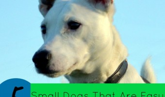 Want a small dog but don't want your house to become his bathroom? Check out this list of 5 small dogs that are easy to house train.