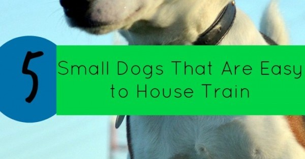 5 Small Dogs That Are Easy To House Train Dogvills
