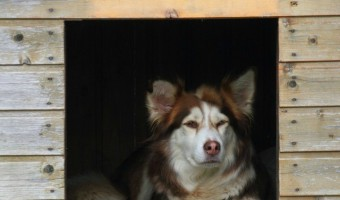 Looking for a new shelter for your pooch? Check out our guide to buying a Home Depot Dog House, including the different types, styles and more!