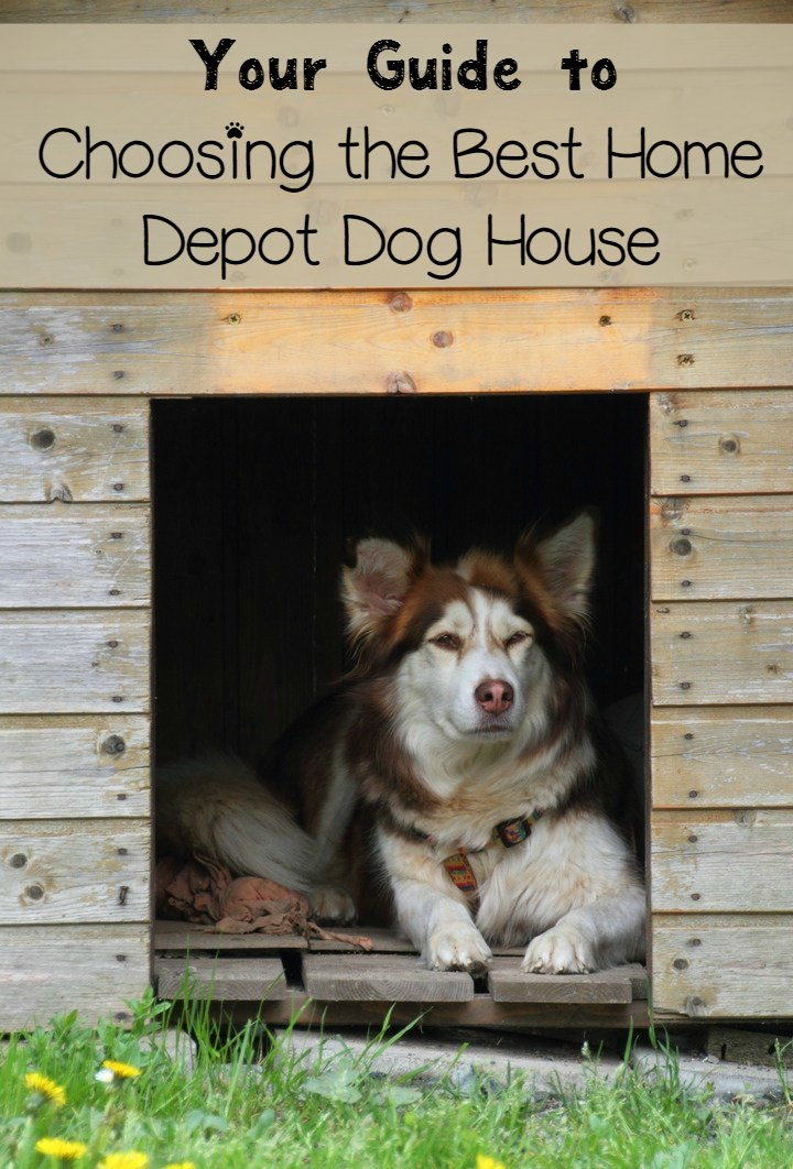 Dog House Shopping Guide: Choosing the Best Home Depot Dog House