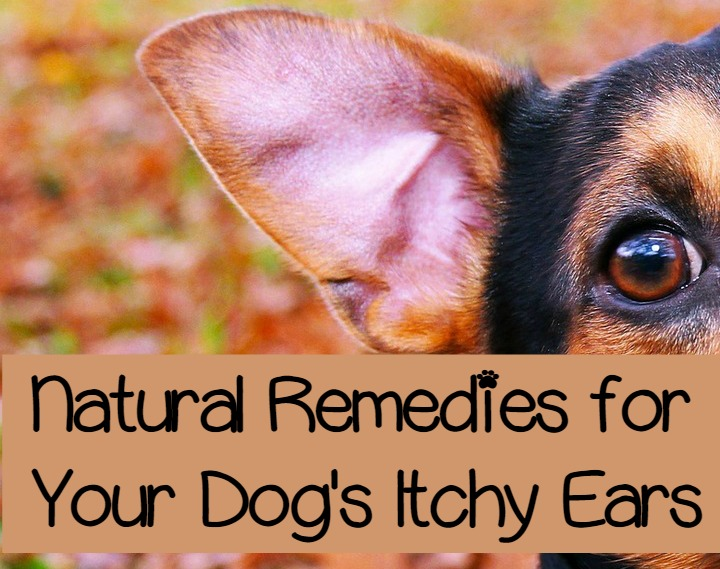 Home Treatment For Dog Itchy Skin