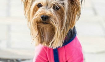 Choosing a great lightweight waterproof dog jacket is a must when walking your dog during the rainy season! Check out our tips!