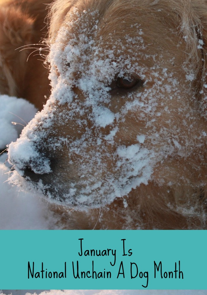 Tips to Unchain Your Dog & Keep Him Safe Outside During Winter