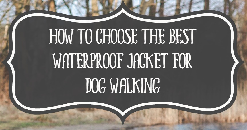Best Waterproof Jacket for Dog Walking- DogVills