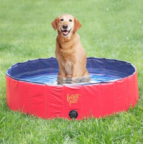Kiddie pool: one of the 7 Ways to Keep Dogs Cool and Busy in the Summer