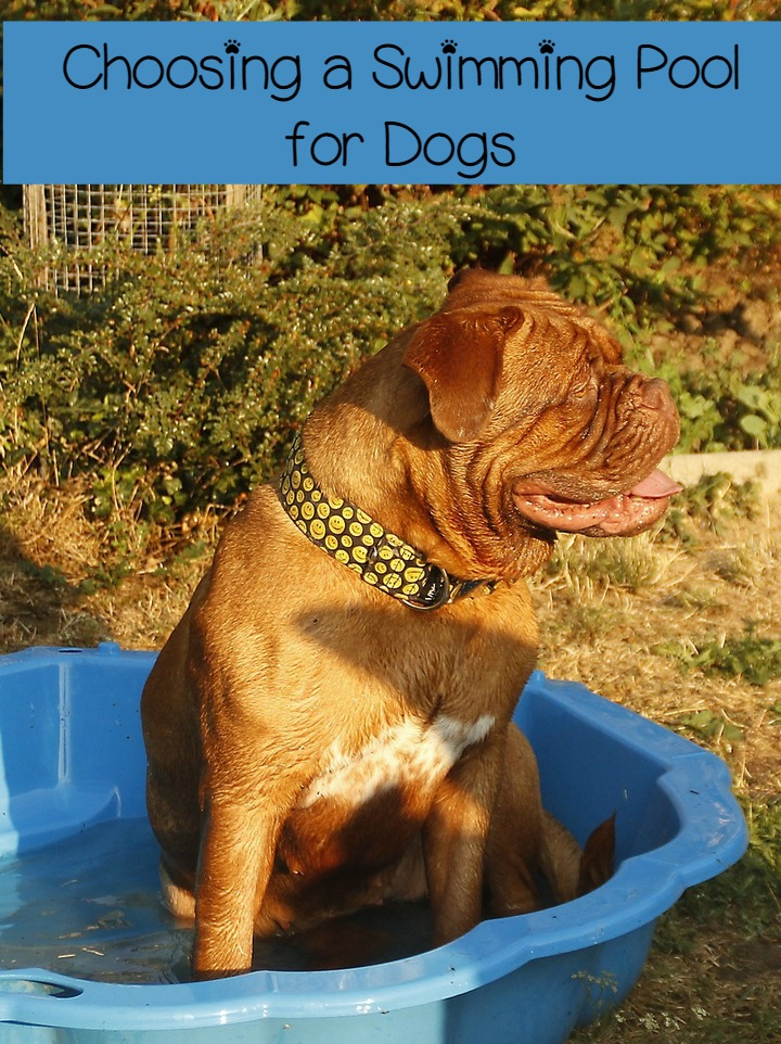 Choosing the Best Dog Swimming Pool for Every Budget & Backyard