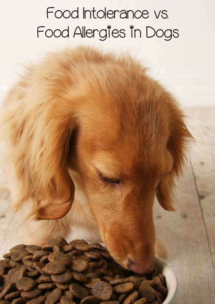 Food Intolerance vs. Food Allergies in Dogs: What's the Difference?