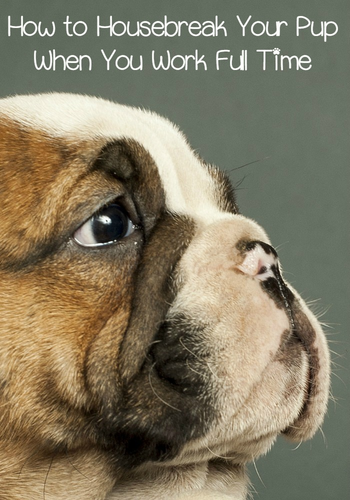 5 Tips To Housebreaking Your Puppy When You Work Full Time Dogvills