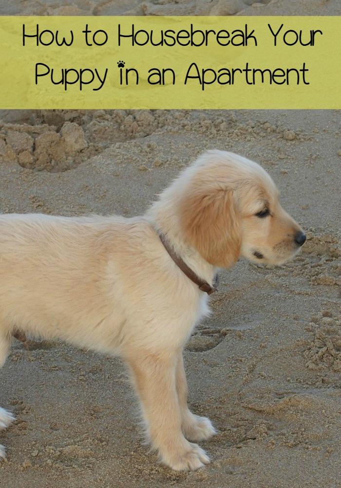 my first puppy essay