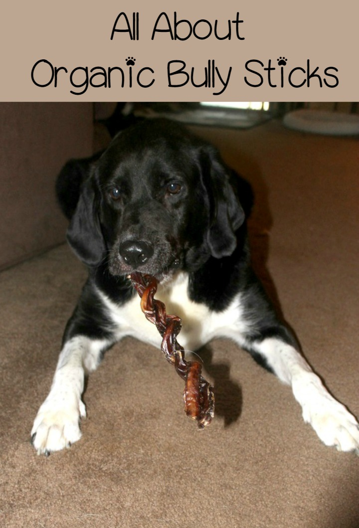 Organic Bully Sticks: A Great Choice for Hardcore Chewers!