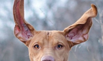 The weather breaks, it is suddenly a little warmer out and you are looking for games to play with your dog this Spring. Check out a few of our favorite spring games for dogs!