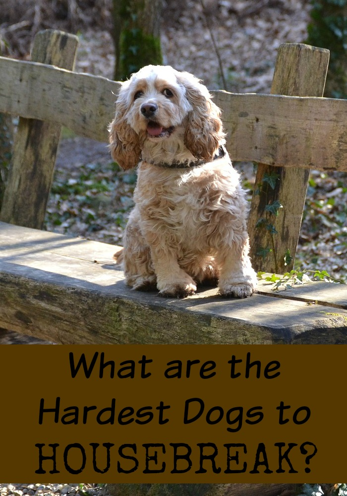 What are the Hardest Dogs to Housebreak?