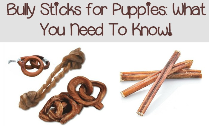 what you need to know about buying bully sticks for puppies dogvills. Black Bedroom Furniture Sets. Home Design Ideas