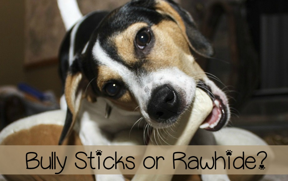 bully sticks vs rawhide best chews for dogs. Black Bedroom Furniture Sets. Home Design Ideas