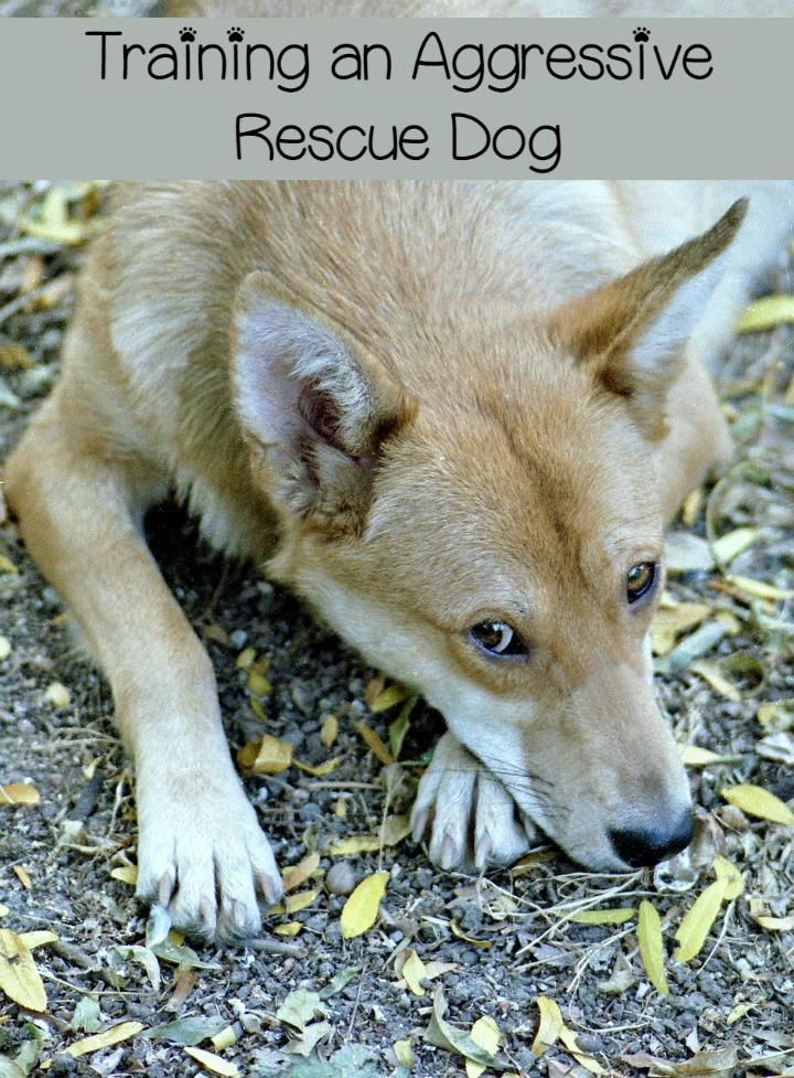 Fear Aggressive Dog Rescue