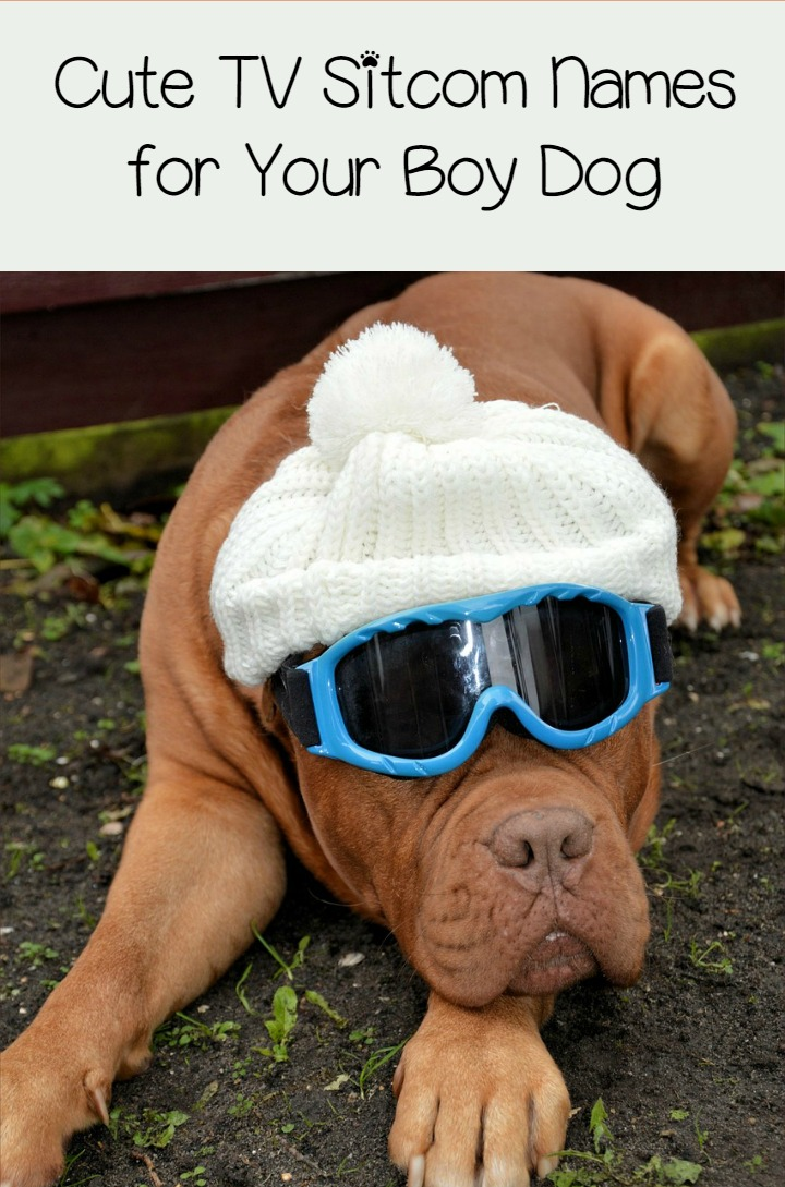 11 Clever Male Dog Names Inspired by TV Sitcoms