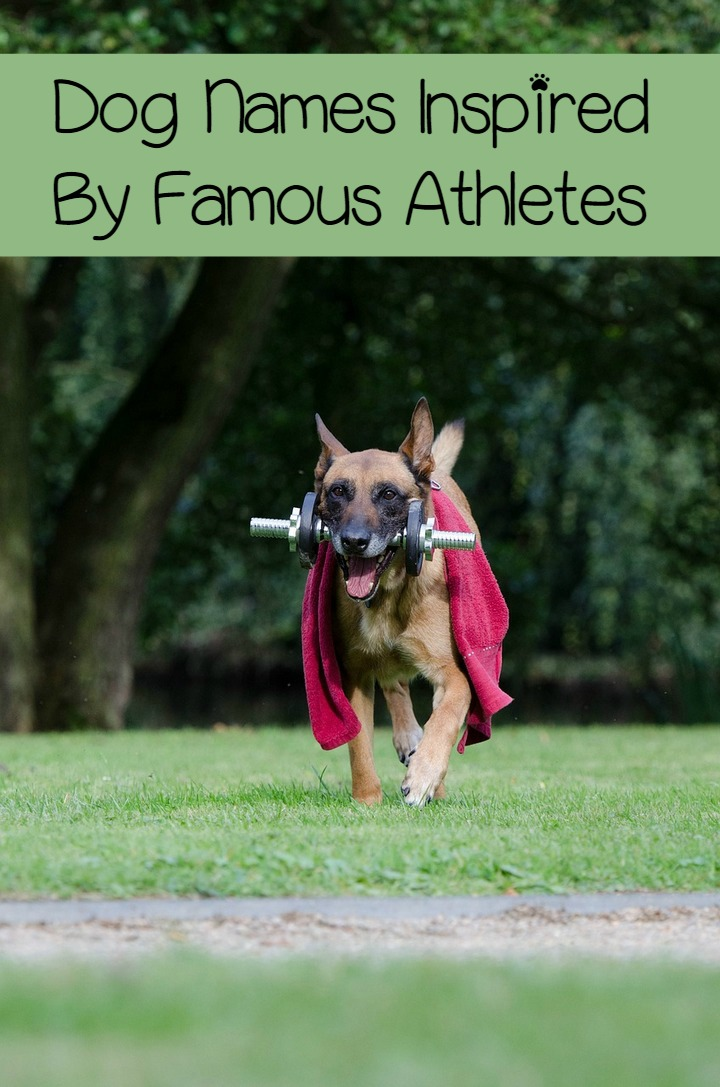 7 Spectacular Dog Names Inspired By Sports Stars