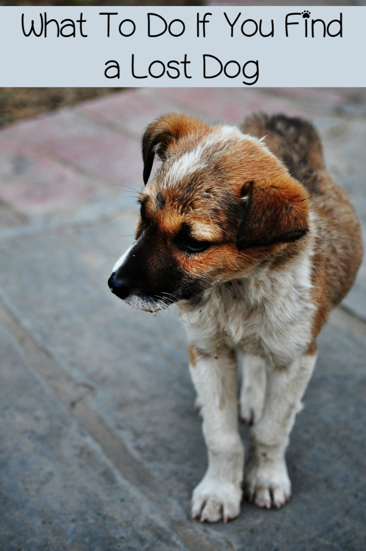 What to Do After Finding a Lost Dog