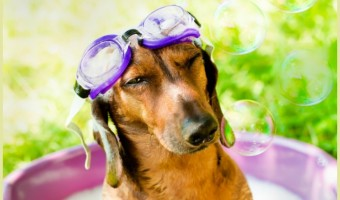 Can bathing your dog really save shelter dogs? Thanks to 11-year-old Austin of HydroDog, it can! Check out how you can get involved in this great cause!