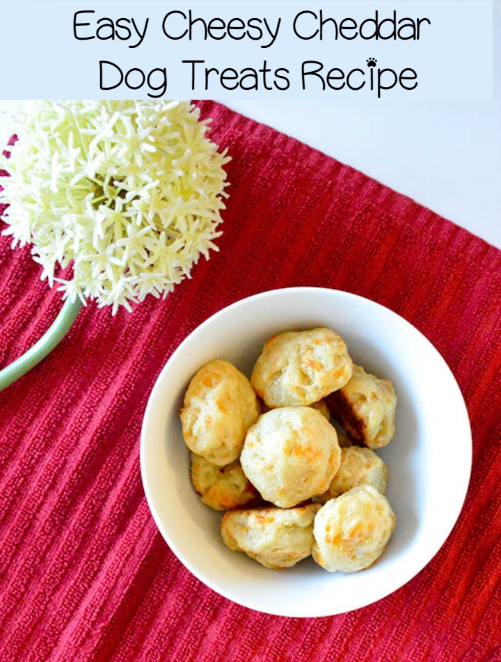 Easy Cheesy Homemade Cheddar Dog Treats Recipe
