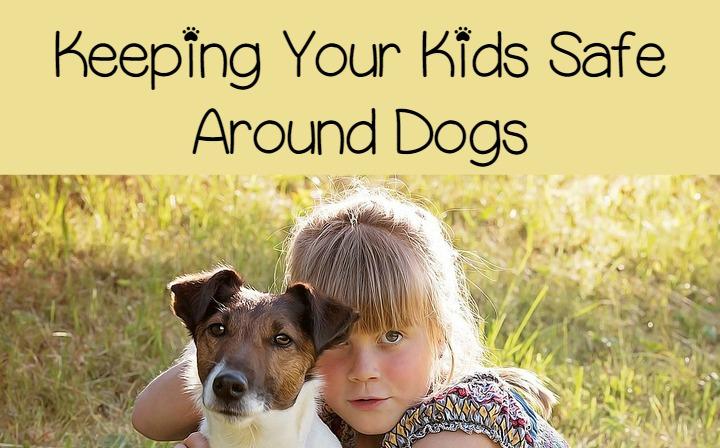 Best Child Friendly Dog Breeds