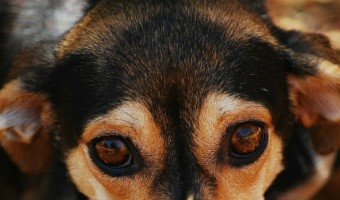 Dog allergy testing can be a great help in combating allergens. Dog allergy testing helps you decide the best course of action for your dog's allergic woes.
