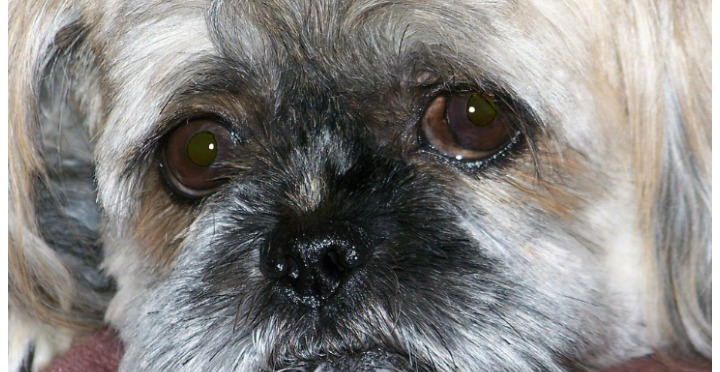 Why Do Dogs Eyes Get Watery