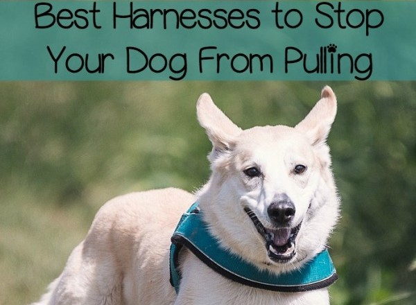 Does Harness Stop Dog Pulling