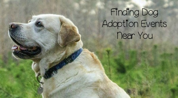 5 Tips to Find Dog Adoption Events Near You DogVills